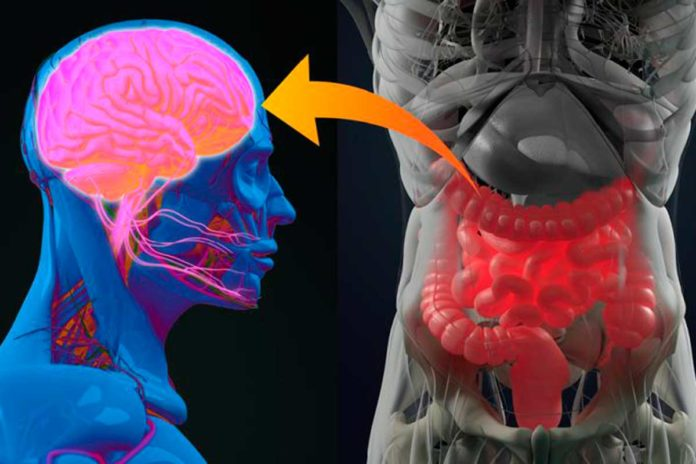 Diabetes: hallazgo en el eje intestino-cerebro